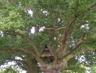 The oak tree in Castle Meadow has an owl box and Sylvia enjoys watching the barn owl fly over the field .